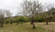 Terreno c da Saccollino7
