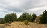 Terreno c da Saccollino8
