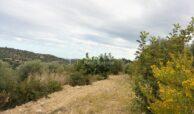 Terreno c da Saccollino9