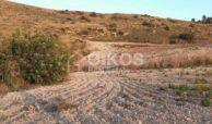 Terreno agricolo c da Renna7