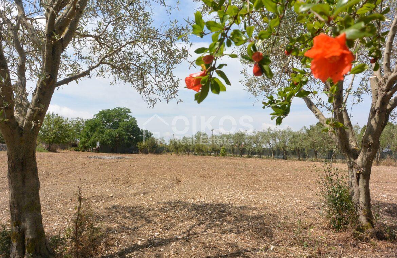 Terreno agricolo c da Sarculla1