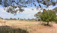 Terreno agricolo c da Sarculla2