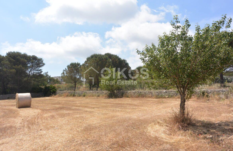 Terreno agricolo c da Sarculla3