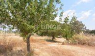 Terreno agricolo c da Sarculla4