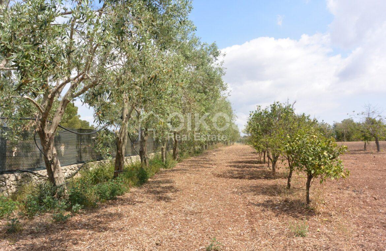 Terreno agricolo c da Sarculla7