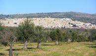 Terreno edificabile con vista su Noto (10)