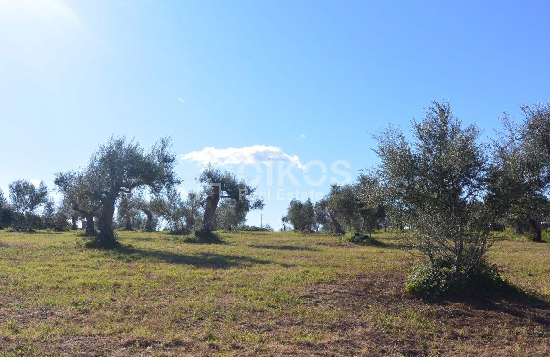Terreno edificabile con vista su Noto (3)