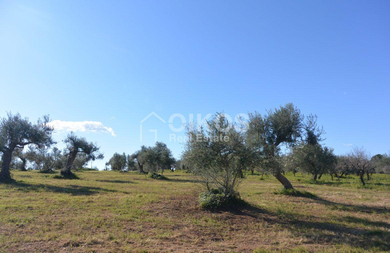 Terreno edificabile con vista su Noto (6)