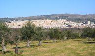 Terreno edificabile con vista su Noto (7)